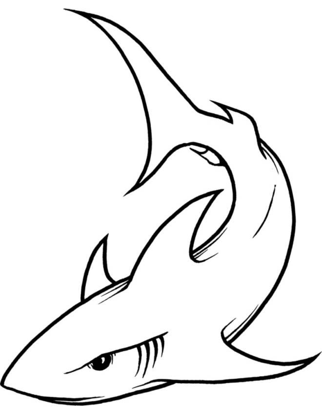 Disegno di lo squalo da colorare per bambini for Squalo da colorare per bambini