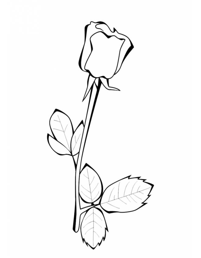 disegno di La Rosa da colorare