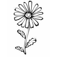disegno di Fiore Margherita da colorare