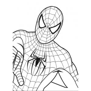 Disegno di spiderman da colorare per bambini gratis for Disegni di spiderman da colorare