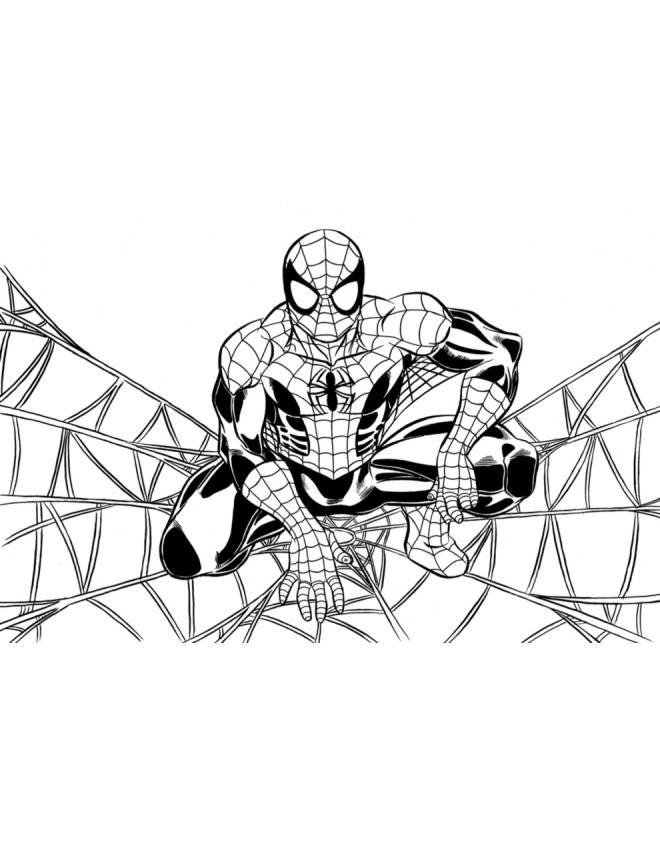 Disegno Di Spiderman Sulla Ragnatela Da Colorare Per Bambini