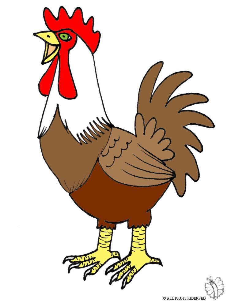 Stampa disegno di gallo a colori - Immagini di tacchini a colori ...