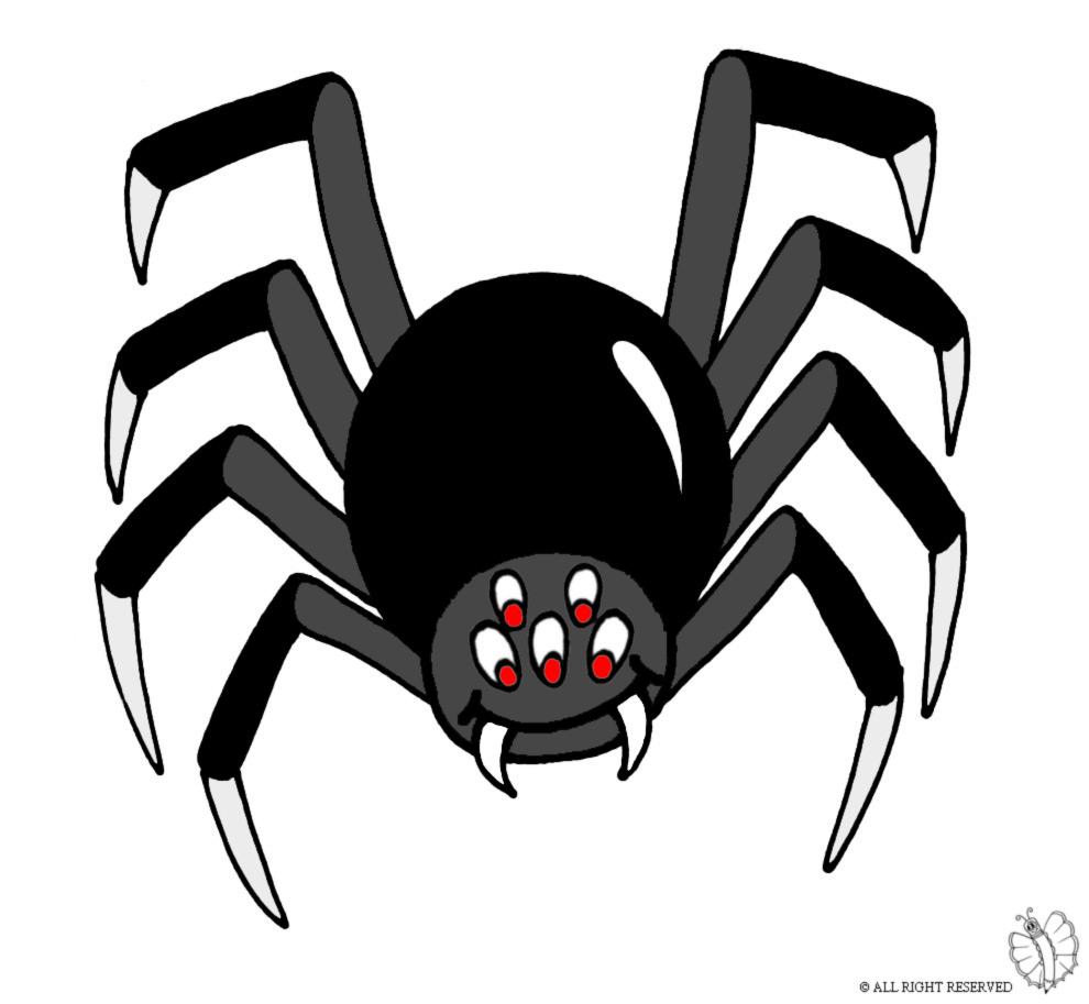 Stampa disegno di ragno per scherzo carnevale a colori - Immagini del ragno da stampare ...