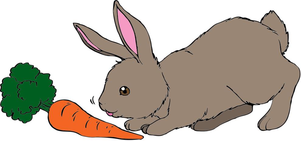 Stampa disegno di il coniglio e la carota a colori for Disegno coniglio per bambini