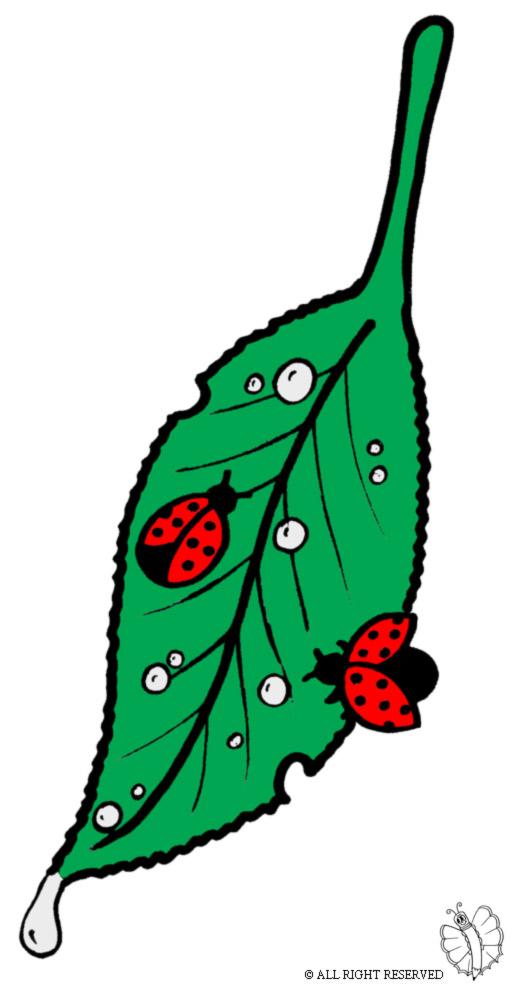disegno di Foglia con Coccinelle a colori