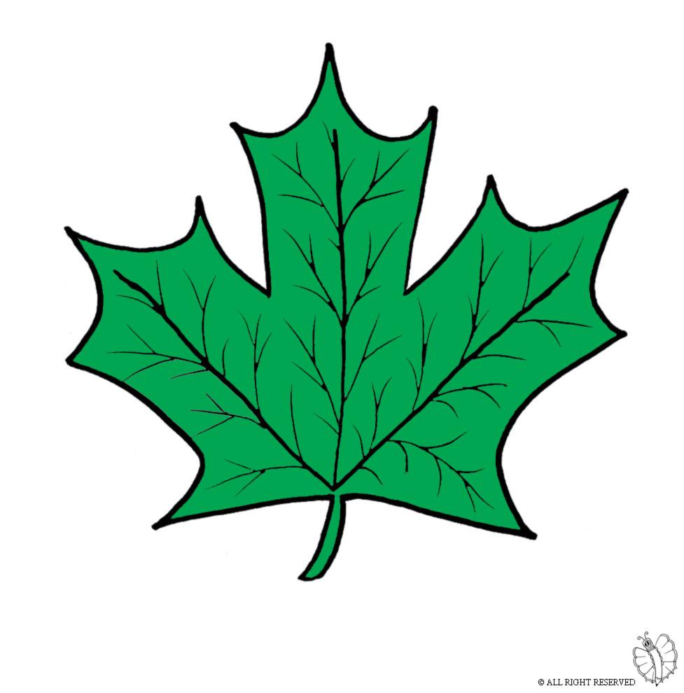 Stampa disegno di foglie a colori - Modello di foglia per bambini ...