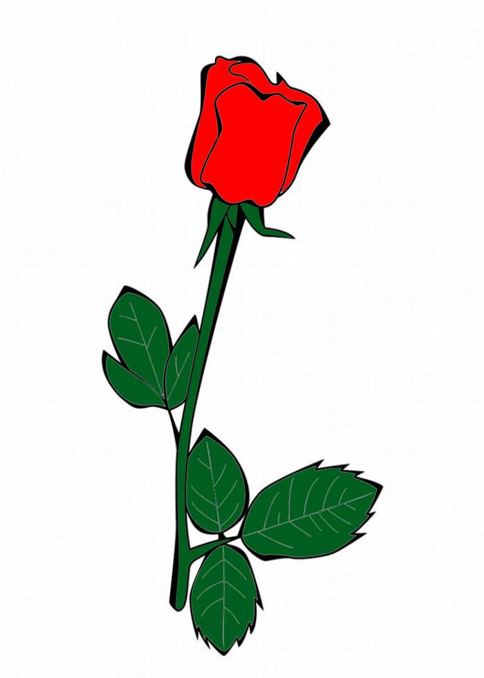 Stampa disegno di la rosa a colori for Immagini da colorare di rose