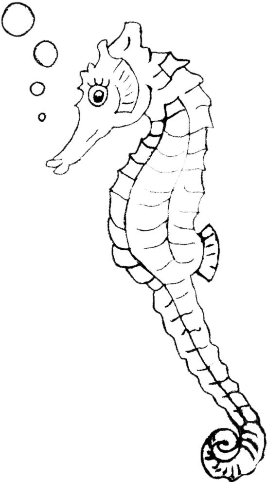 Stampa disegno di cavalluccio di mare da colorare for Pesciolini da colorare e stampare