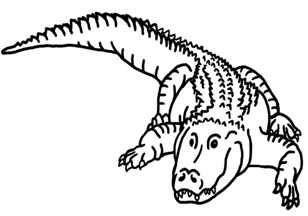 Stampa disegno di il coccodrillo da colorare for Coccodrillo da colorare
