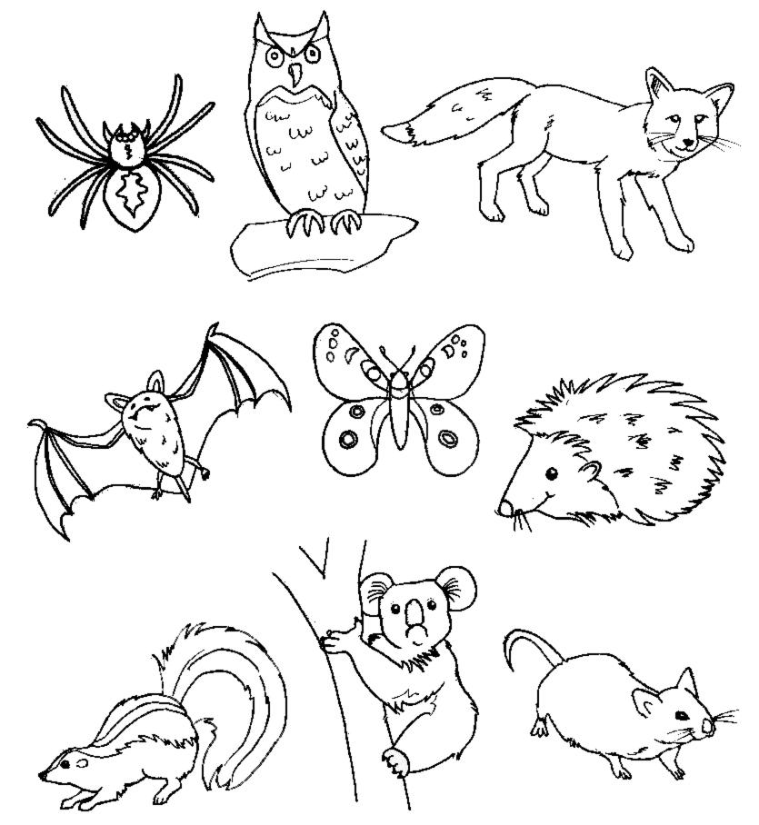Stampa disegno di animali del bosco da colorare - Animali immagini da colorare pagine da colorare ...