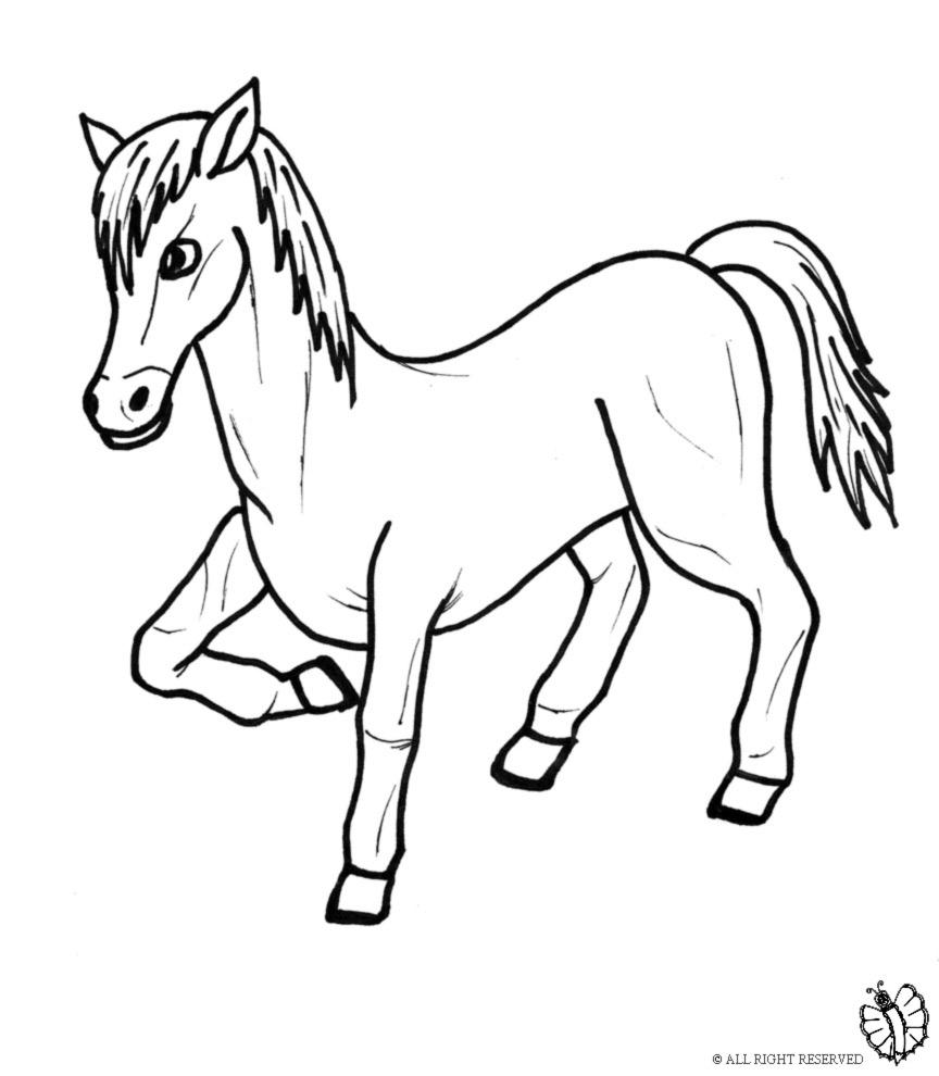 Stampa disegno di pony da colorare for Disegni di animali per bambini