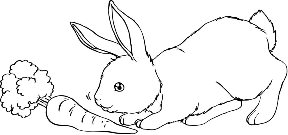 Stampa disegno di il coniglio e la carota da colorare for Coniglio disegno per bambini