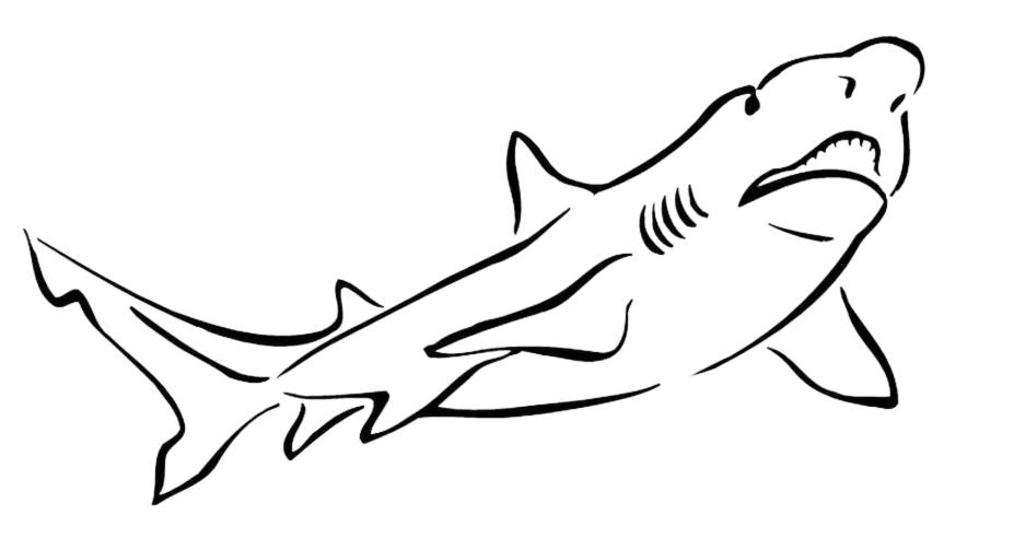 Stampa disegno di squalo da colorare for Immagini di pesci da disegnare