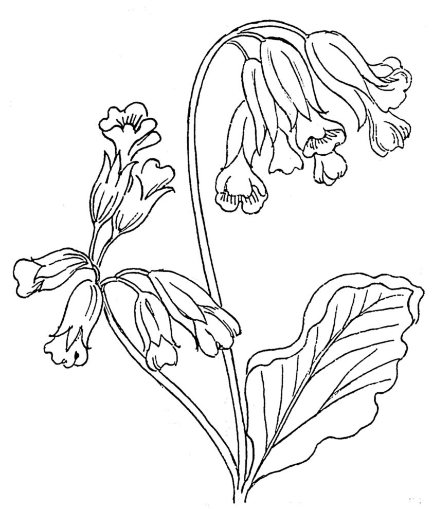 disegno di Fiori Campanelle da colorare