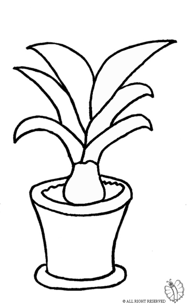 Pianta carnivora da colorare idee per interni e mobili - Disegno pianta casa ...