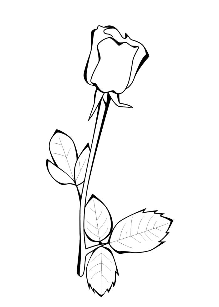 Stampa disegno di la rosa da colorare - Immagini da colorare di rose ...